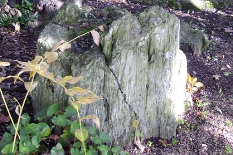 Fossilised Tree
