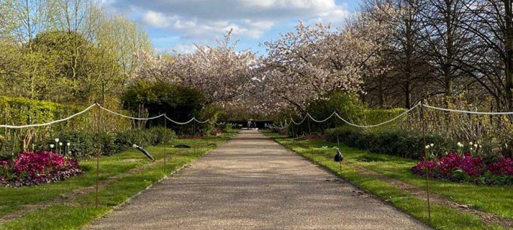 Blossom Arch